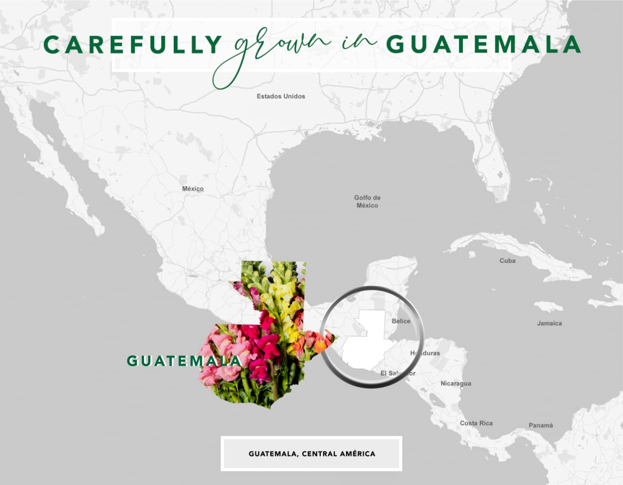 We deliver and shipping to North America and Central America, carefully grown in Guatemala